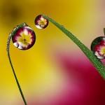 gotas reflejando flores